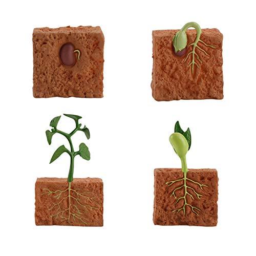 Semillas De Plantas Juguetes De Crecimiento Modelos Cognición Rana Sólida Modelo Animal Simulación Insecto Mariposa Crecimiento Animal Ciclo De Vida Modelo Juguete Para Niños Educación Preescolar
