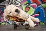 Vlies Fototapete für Kinderzimmer 'Hund / Grafitti / Skateboard Puppy'