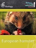European hamster - School Movie on Biology