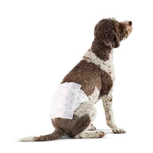 Amazon Basics - Pañal desechable para perro macho, L, paquete de 30 unidades