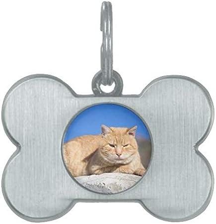 hueso de acero inoxidable Rfy9u7 Etiquetas personalizadas para mascotas para perros y gatos nombre de ancla n/áutica y n/úmero de tel/éfono azul verde etiqueta de identificaci/ón para mascotas regalos