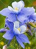 100+ SEEDS Purple Lagerstroemia indica Crape Myrtle Tree Seeds bonsai flower Seeds