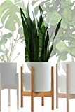 Fox & Fern - Multi-Tiered Plant Stands - Set of 3-8'/10'/12'...