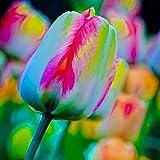 Hreway 100pcs/ Bag Rainbow Tulip Bulbs Seeds Garden Flower Plant Flowers