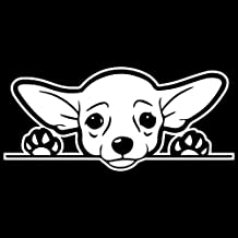 Cute Chihuahua Dog Vinyl Decal Sticker | Cars Trucks Vans SUVs Windows Walls Cups Laptops | White | 7 Inch | KCD2432