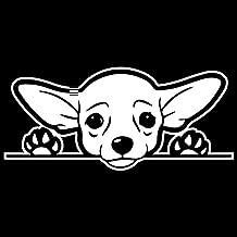 Cute Chihuahua Dog Vinyl Decal Sticker | Cars Trucks Vans SUVs Windows Walls Cups Laptops | White | 7 Inch | KCD2432