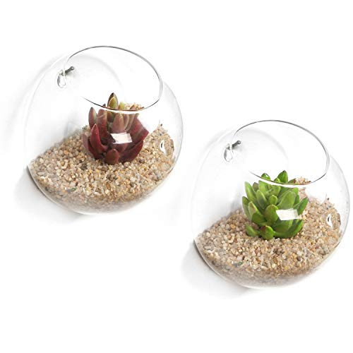 Wall-mounted glass terrarium for plants