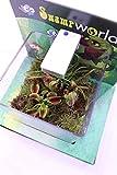 terrario piante carnivore piante carnivore da interno piante carnivore vere da interno vendute da egarden.store