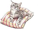 Pintura por Números Gato animal de arte Bricolaje Pintura al óleo para Colorear por números en Lienzo de Lino decoración de Arte de Pared 16x20 Inch sin Marco -HYS167