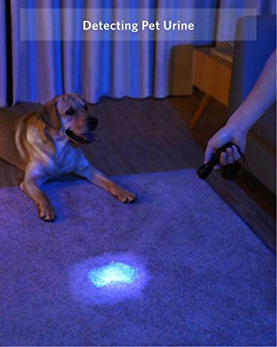 Anker Bolder UV Flashlight Rechargeable, 380nm Ultraviolet Blacklight Detector for Dog Urine, Pet Stains and Fluorescence, Pocket-Size LED Torch, IPX5 Water Resistant, 18650 Battery Included 3