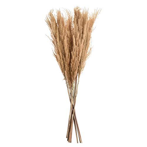10 stycken pampasgräs, torkad dekoration, torkade blommor, vaser, torkade växter, 60 cm, för evigt hållbart pampasgräs, torkat för inredning, sovrum, vardagsrum, balkong, badrum, bordsdekoration