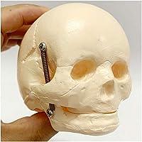 胎児頭蓋骨のモデル - 胎児頭蓋骨の解剖学モデル - 幼児骨格モデルの医療スカルのモデル - 赤ちゃんの頭蓋骨 - ヒューマンの教育モデル