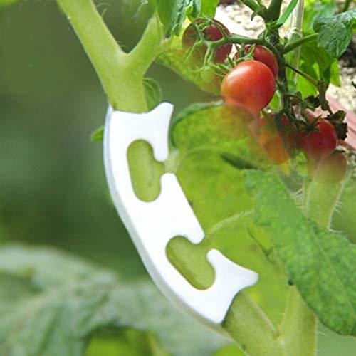 100PCS Pflanzen Clips Plant Clip Tomatenpflanzen Vine Seedling Clamp Verstärkte Clips Obst Pflanzen Anti-Biege-Clips
