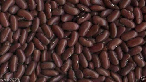 Bean, 200 graines, GRAND brun foncé/haricots rouges, organique, Non traitée, Heirloom!