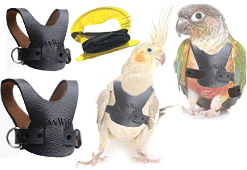 Avianweb EZ Rider Bird Harness with 8 Ft Leash (Cockatiel)