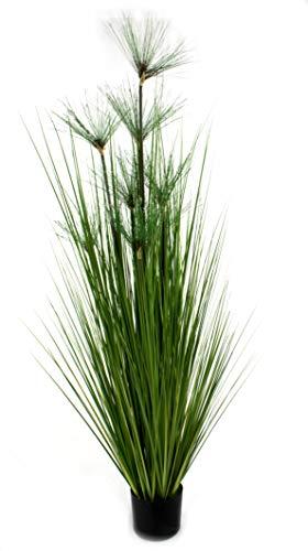 DARO DEKO Kunst-Pflanze Gras im Topf Papyrus Gras mit grünen Blüten 170cm