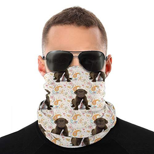 Puppy Chocolate Lab Besos Headwear Face Protector Pasamontañas Cuello Polainas