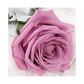 DIY 5D Diamond Painting Pink Rose Number Kit for Adults Round Rhinestone Embroidery Cross Stitch Flower Painting Arts Craft Canvas Wall Decor Pink Rose,11.8X11.8inch