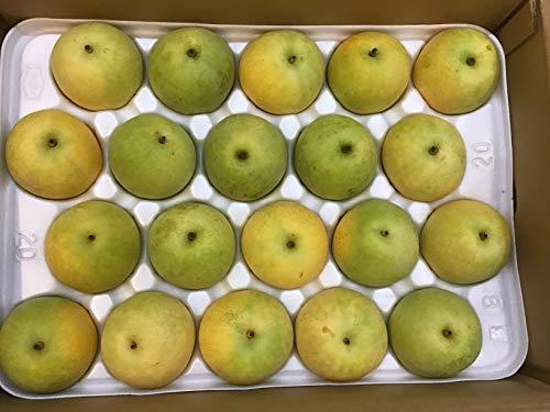 鳥取県産二十世紀梨(20個入り)