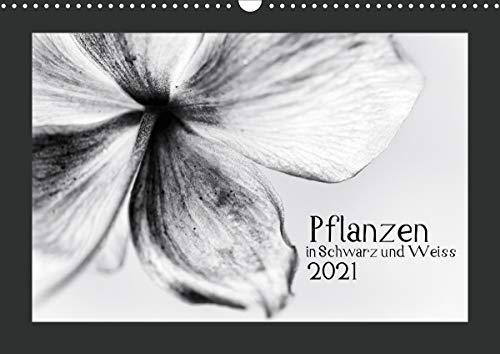 Pflanzen in Schwarz und Weiss/CH-Version (Wandkalender 2021 DIN A3 quer)