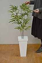 黒竹 3本立 110cm