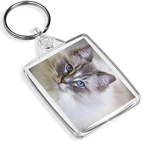 Llavero de vinilo con diseño de gato de muñeca de trapo, IP02, divertido felino amistoso 16863