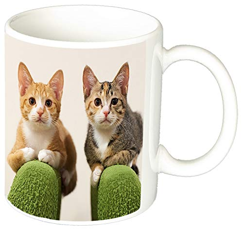 MasTazas Gatitos Gatos Kittens Cats I Tasse Mug
