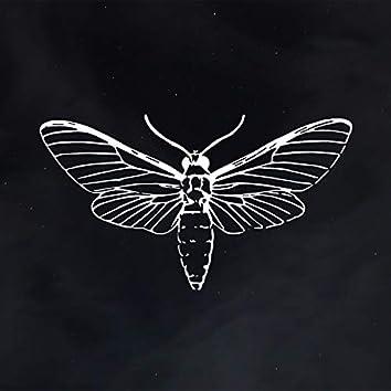 Moth in the Night