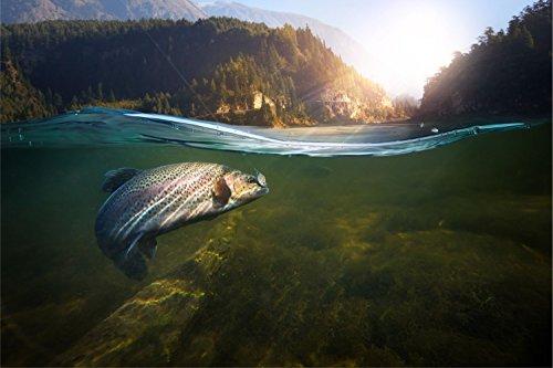Fisch Angeln Forelle Natur Wald Bild XXL Wandbild Kunstdruck Foto Poster P1021 Größe 90 cm x 60 cm