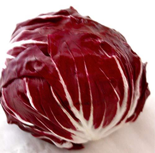 Portal Cool 2G (Approx. 1300) Radicchio Samen Palla Rossa Beliebte italienische Gemüse, Einzigartige