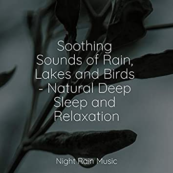 Soothing Sounds of Rain, Lakes and Birds - Natural Deep Sleep and Relaxation