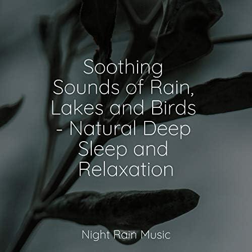 Natural Nature Makers, Water Soundscapes & Meditative Music Guru