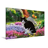 CALVENDO Premium Textil-Leinwand 120 cm x 80 cm quer, Katze in Einer bunt blühenden Gartenidylle | Wandbild, Bild auf Keilrahmen, Fertigbild auf echter die letzten Sonnenstrahlen Tiere Tiere