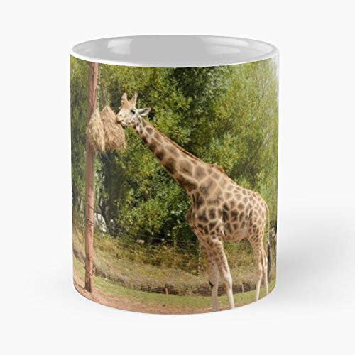 Jirafa Safari Park Animales Wild Giraffes Africanos Comer Comida Bite John Best Taza de café de cerámica de 325 ml