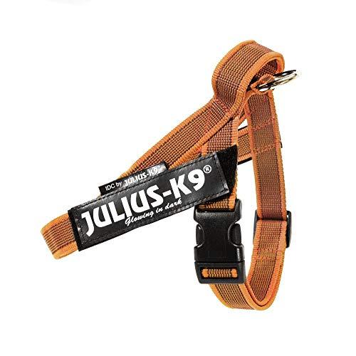 Julius-K9 Arnes Cinta,Color & Gray Size: Mini, Naranja 1 Unidad 600 g