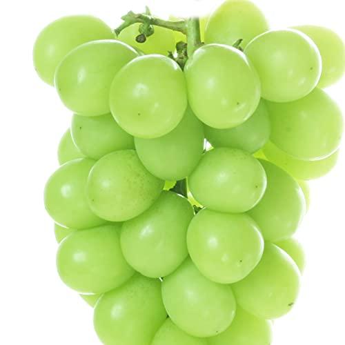 国華園 ぶどう 山梨産他 シャインマスカット 約300g×2パック ご家庭用 産地おまかせ パック 葡萄 ブドウ フルーツ くだもの 食品