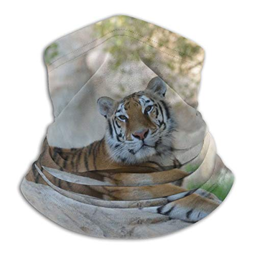 Polyester-Schal, 25 x 30 cm, Tiger, Katze, (1) Tolles Halstuch für Herbst/Winter, Skifahren, Spaziergänge, Wandern, Motorrad, Radfahren, Hunde-Spaziergänger