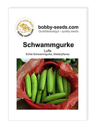 Luffa cylindrica Schwammgurke von Bobby-Seeds Portion