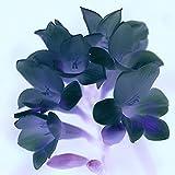 Freesia Zwiebeln - Gartenpflanzen Blumenbeet Frische Schnittblumen Zarte und Schöne Blütenblätter-5 Freesia Zwiebeln,B