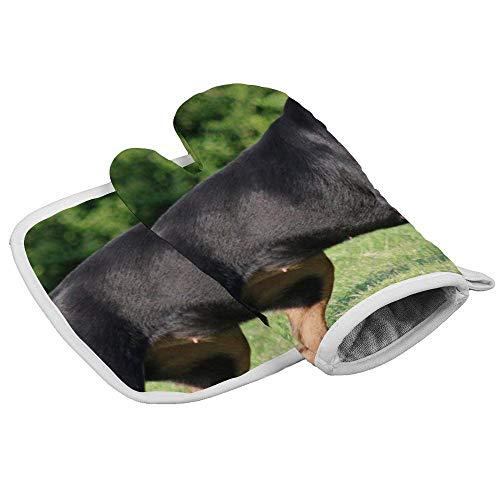 QUEMIN San Patrizio I Love Rottweiler Set di Guanti da Forno e presine per Cucina Guanti da Forno per microonde Cottura Barbecue Cottura alla griglia