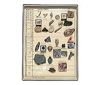 化石標本(化石標本30種) /3-654-05
