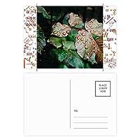 露の葉の植物の自然の写真 公式ポストカードセットサンクスカード郵送側20個