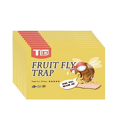 Fruit Fly Trap,Fly Paper,Sticky Trap,Fly...