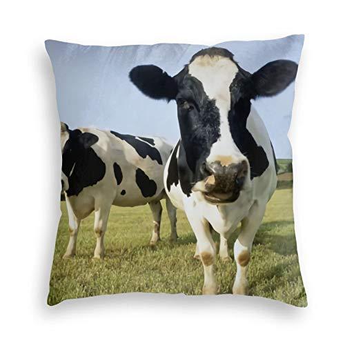 Fundas de cojín de terciopelo suave con dos vacas Holstein de pie en la hierba para sofá dormitorio coche con cremallera invisible 45,7 x 45,7 cm