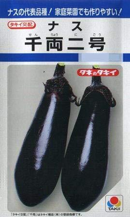 千両2号 タキイの長卵形ナス種です