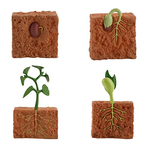 NUOBESTY Life Cycle of a Green Bean Plant Simulation Plant Toy Set Seed Toy Set Seed Life Cycle Toy Educational Toy