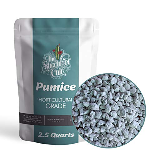 Horticultural Grade Pumice (2.5 Dry QUARTS) – Bonsai, Cactus, Succulent Soil Additive – Eliminate Root Rot – Ready to Use, by The Succulent Cult