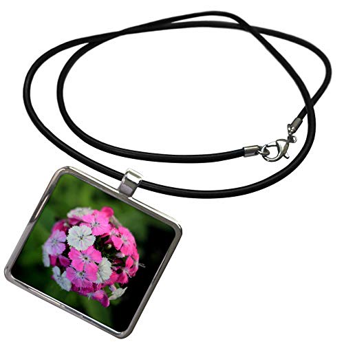 3dRose Stamp City - Flowers - Close up Photo of Dianthus barbatus - Sweet William in Shades of Pink. - Necklace with Rectangle Pendant (ncl_308721_1)