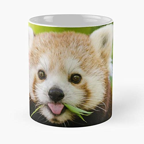 Desconocido China Endangered Cute Cheeky Red Bamboo Mountain Panda Taza de café con Leche 11 oz