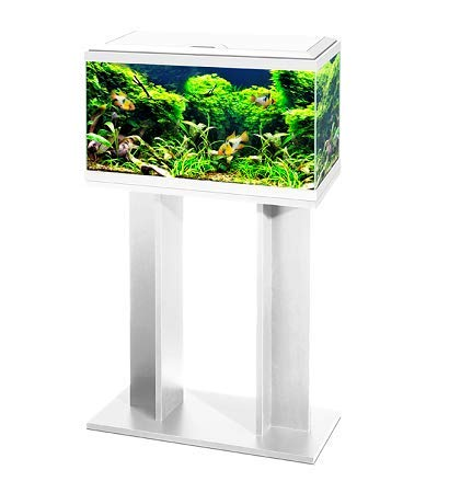 Ciano 60 Tropical Glass 2ft Aquarium & Stand - Includes Filter, LED Lights, Heater & Siphon 58 Litres (WHITE)